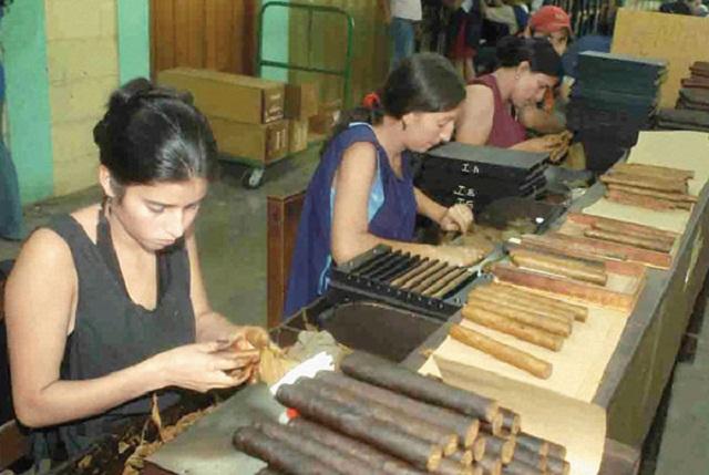Những công nhân đang làm việc tại 1 xưởng xì gà ở Cuba